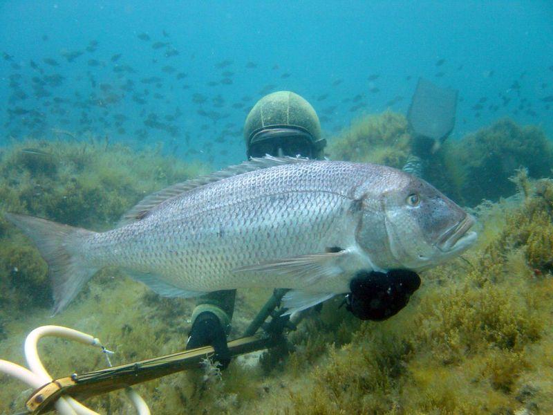 Gađanje i približavanje ribi
