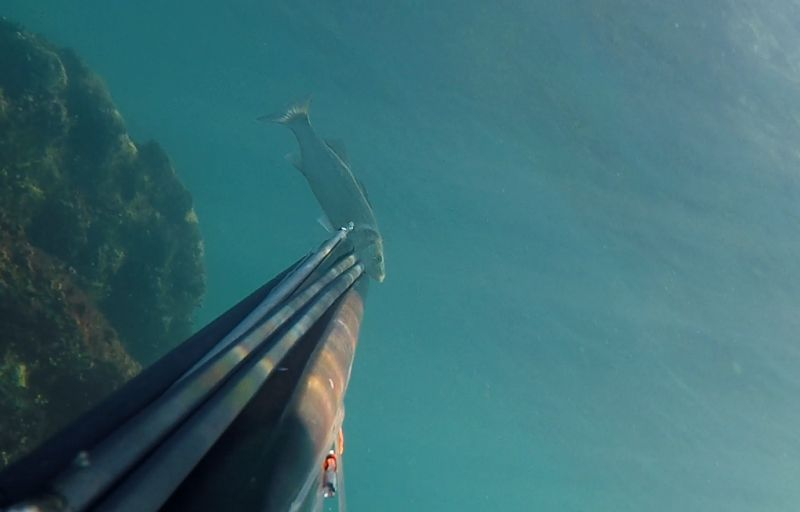 Lov lubina u podvodnom ribolovu (1)