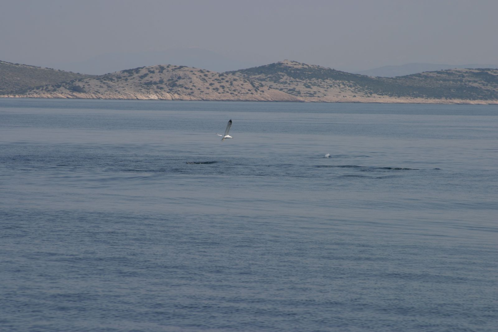 udica oceana izvora