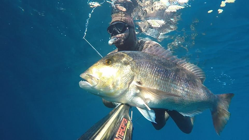 Savjeti za uspješan podvodni ribolov