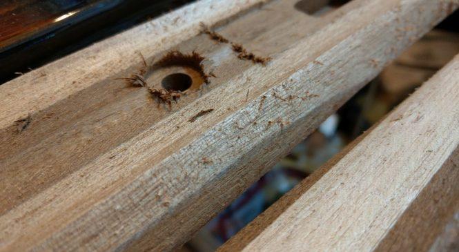 Priprema drva za podvodnu pušku (3)