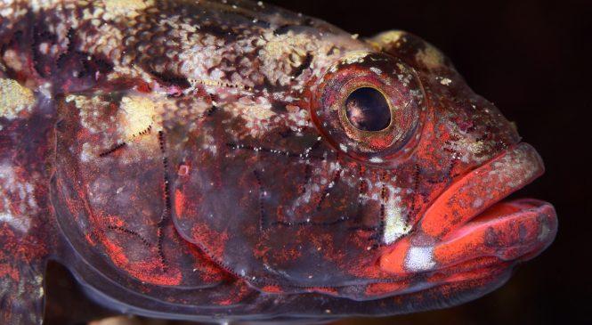 4. Mares Underwater Photo Marathon – pobjedničke fotografije