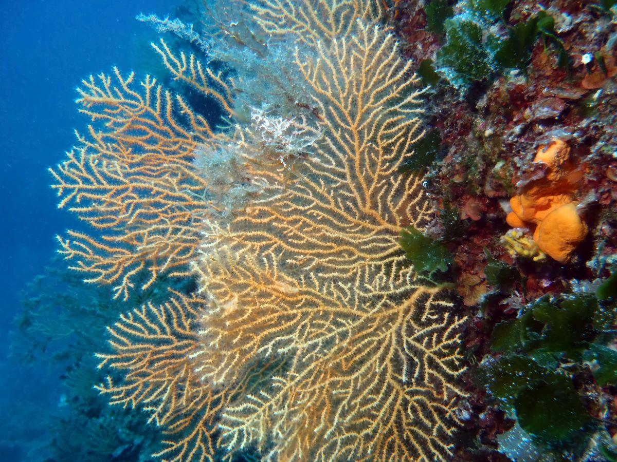 Morsko stabalce