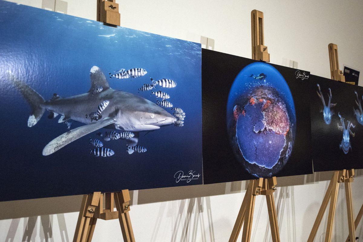 """Izložba podvodnih fotografija """"Plavi svijet"""""""