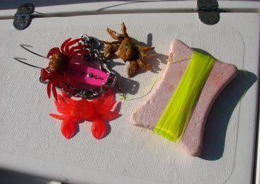 Saonicama po hobotnice