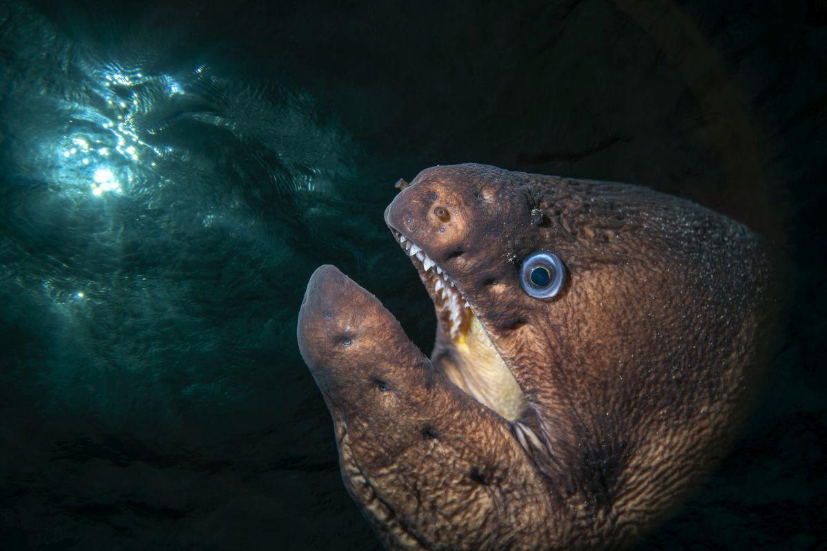 Svjetsko prvenstvo u podvodnoj fotografiji