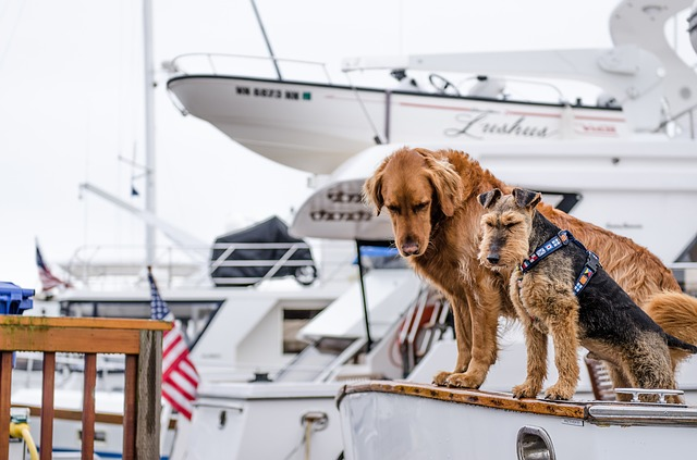 Psi koji pomažu pomorcima