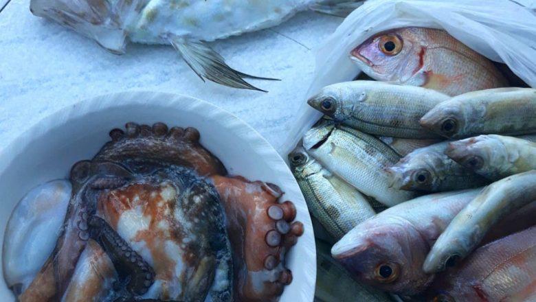 Prikle od ribe