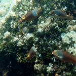 Čudnovate ribe u Jadranskom moru
