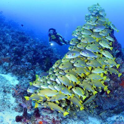 Drugi hrvatski ronilački kongres i velika ekološka akcija čišćenja podmorja na Kvarneru